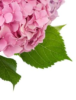 Bukiet kwiatów na białym tle na białej powierzchni
