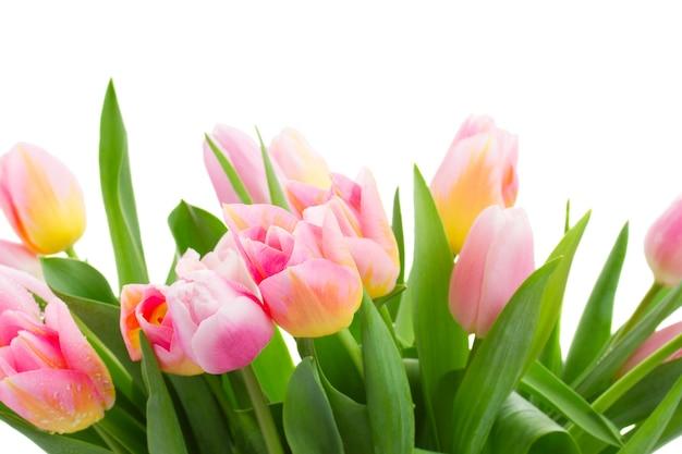 Bukiet kwiatów na białym tle