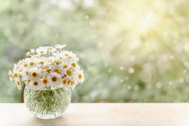 Bukiet kwiatów rumianku z promieniami słońca