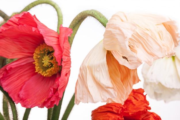 Bukiet kwiatów stokrotki i maku