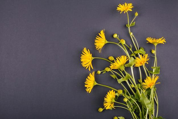 Bukiet kwiatów stokrotki