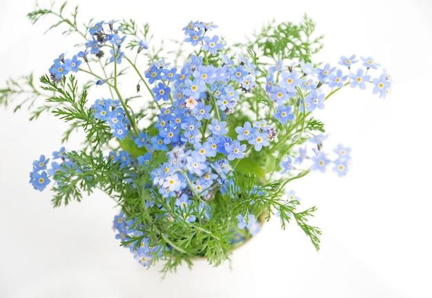 Bukiet kwitnących niebieskich kwiatów niezapominajki na białej powierzchni