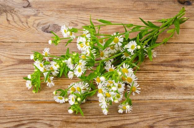 Bukiet małych białych jesiennych stokrotek.