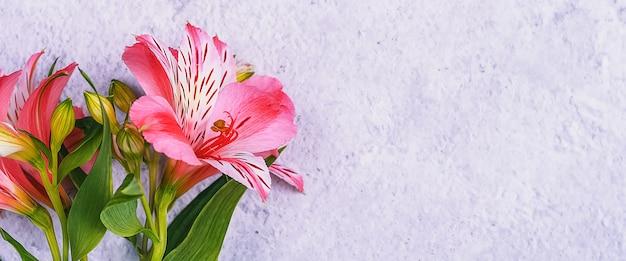Bukiet orchidei jest piękny, świeży, jaskrawoczerwony na jasnym tle.