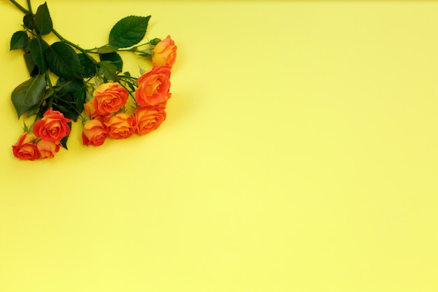 Bukiet piękne pomarańczowe róże na żółtym tle dla świętować rocznicę, urodziny lub matka dzień
