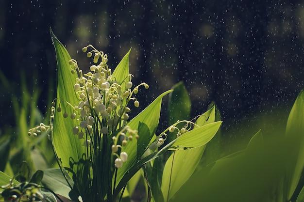 Bukiet pięknych konwalii z kropelkami wody w letnim lesie