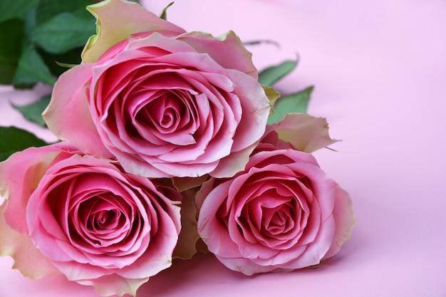 Bukiet pięknych róż na białym tle na różowym tle