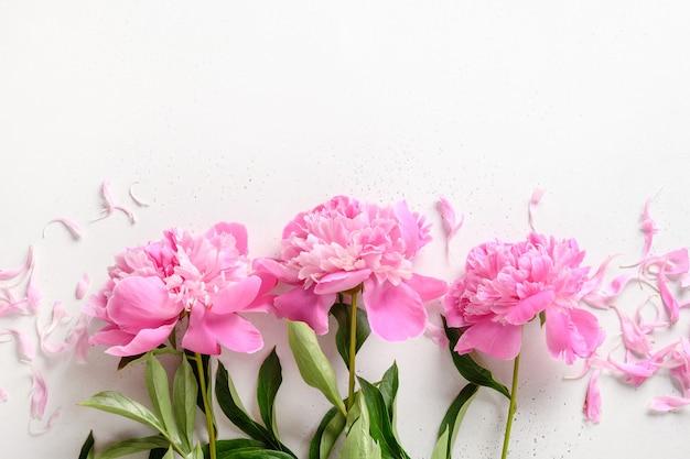 Bukiet pięknych różowych kwiatów piwonii na białym