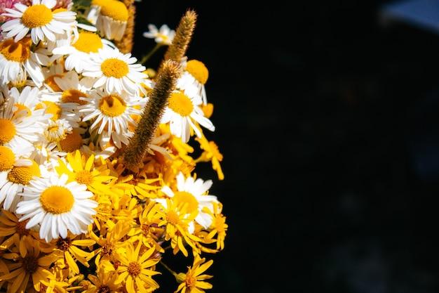 Bukiet polny stokrotek, koniczyny, małych żółtych kwiatków i różnych traw na czarnym tle