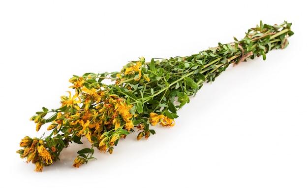 Bukiet roślin