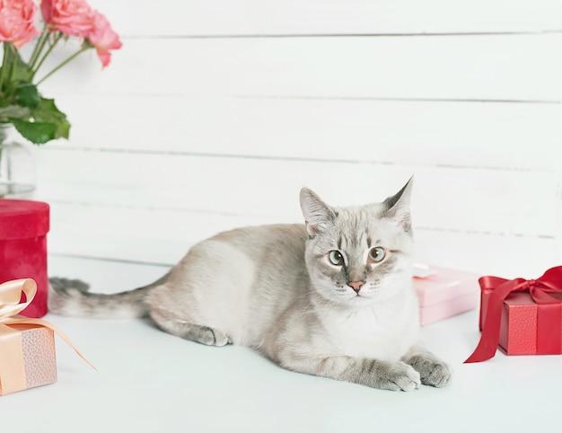 Bukiet róż kwiatów w pobliżu ślicznego kotka