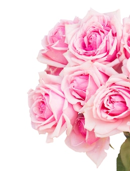 Bukiet róż kwitnących róż z bliska na białym tle