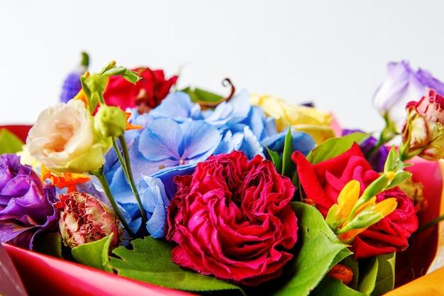Bukiet róż wielobarwnych na pustym białym tle, z bliska