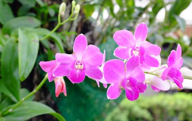 Bukiet różowe kwiaty orchidee