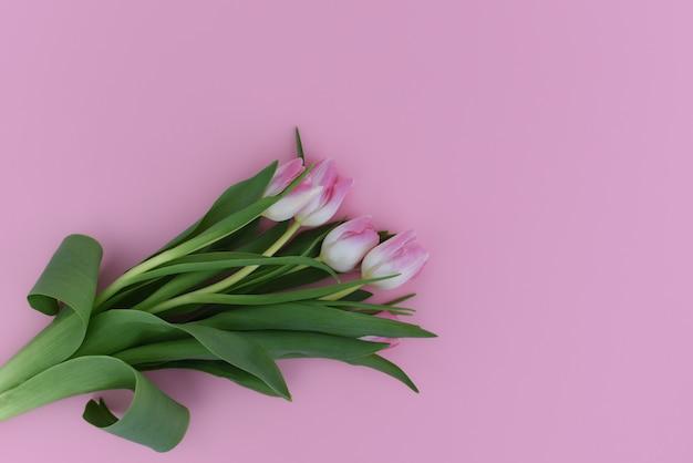 Bukiet różowi tulipany na różowym tle. skopiuj miejsce odosobniony.