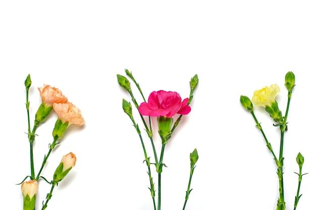 Bukiet różowych goździków na białym tle