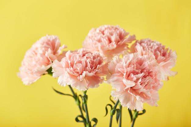 Bukiet różowych goździków na żółtym tle