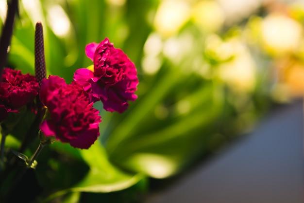 Bukiet różowych goździków