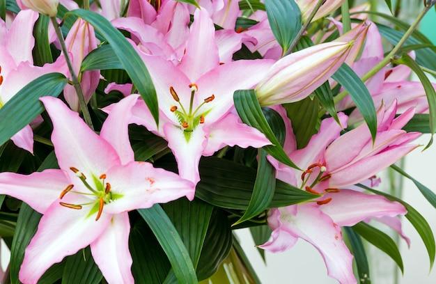Bukiet różowych kwiatów amaryllis belladonnas z bliska.