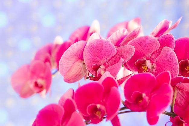 Bukiet różowych storczyków