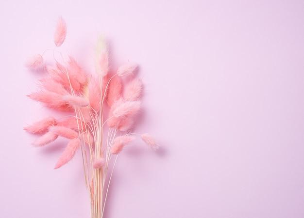 Bukiet różowych suszonych kwiatów na różowym pastelowym tle. skopiuj miejsce