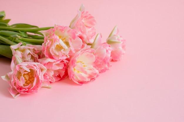 Bukiet różowych tulipanów na różowym tle