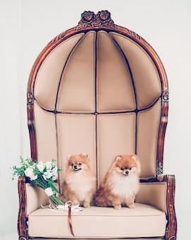 Bukiet ślubny i para uroczych psów siedzących na tronie. wesele dla psów