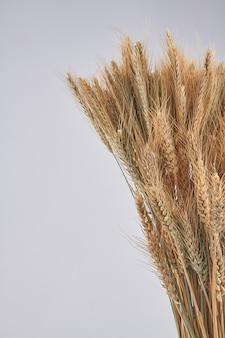 Bukiet suszonych kłosków pszenicy na białym tle