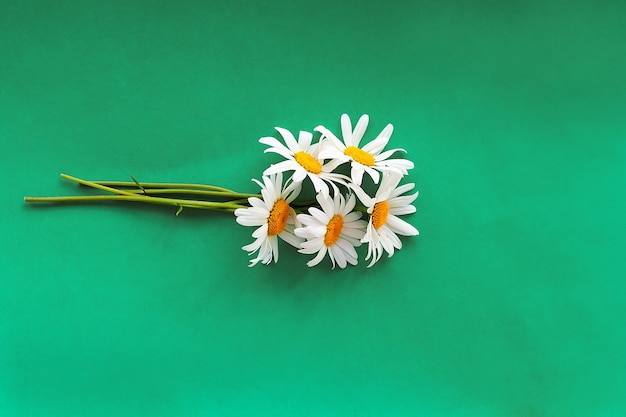 Bukiet świeżo zebranych kwiatów rumianku, koncepcja beauty skin care zdrowe napary herbaty detox.