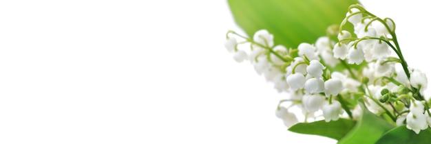 Bukiet świeżości konwalii kwitnącej na białym tle w panoramicznym widoku