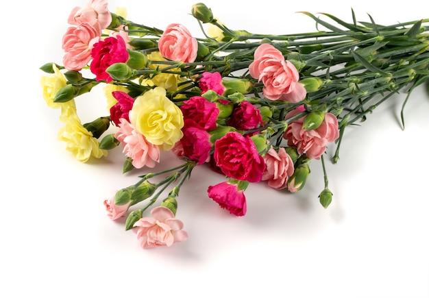 Bukiet świeżych kwiatów goździka na białym tle