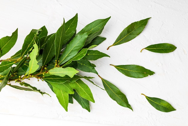 Bukiet świeżych liści laurowych.