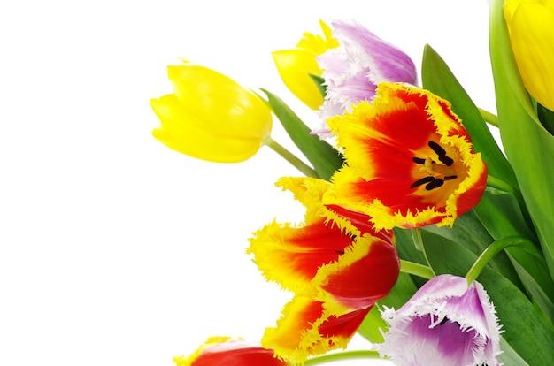 Bukiet świeżych tulipanów