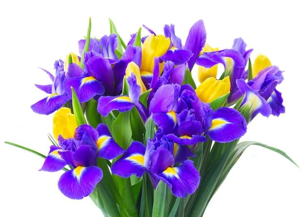 Bukiet świeżych wiosennych żółtych tulipanów i niebieskich irysów z bliska na białym tle