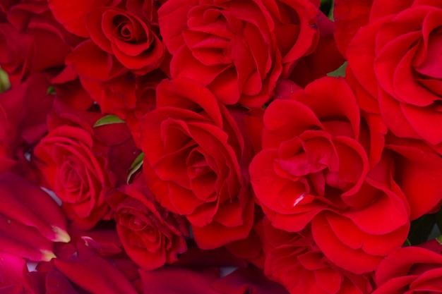 Bukiet szkarłatnych róż