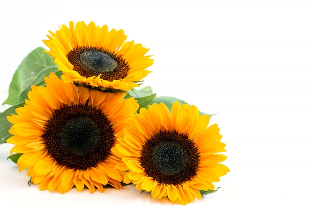 Bukiet trzech słoneczników na białym tle z miejscem na tekst.