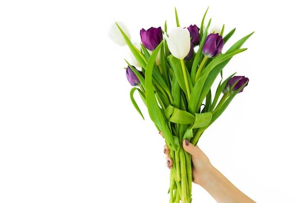 Bukiet tulipanów na białym tle. ktoś trzyma piękne kwiaty