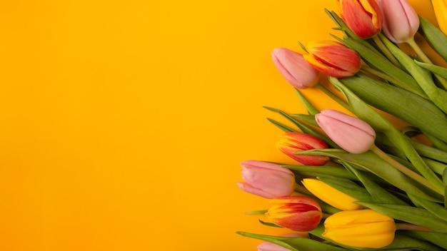 Bukiet tulipanów na żółtym tle. leżał z płaskim, widok z góry z lato.