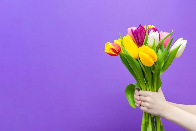 Bukiet tulipanów w rękach na fioletowym tle, chłopiec daje bukiet tulipanów. gratulacje z okazji wakacji, 8 marca, walentynek lub urodzin. wielokolorowe tulipany w dłoni