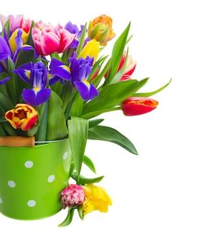 Bukiet wiosennych tulipanów i irysów w zielonej doniczce z bliska na białym tle