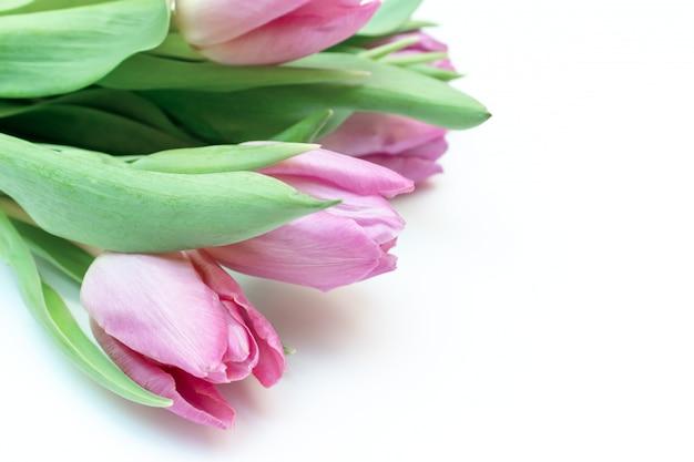 Bukiet wiosna kwiaty, różowi tulipany na białym tle z kopii przestrzenią