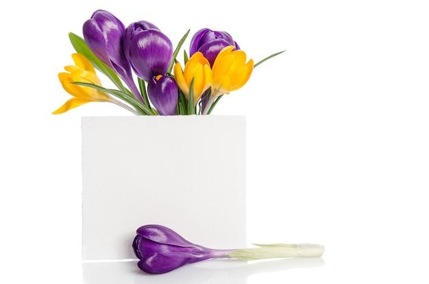 Bukiet z kwiatów krokusa