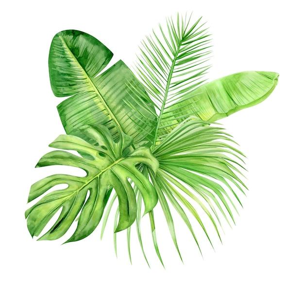 Bukiet zielonych liści palmowych. tropikalna roślina. ręcznie malowane akwarela ilustracja na białym tle.