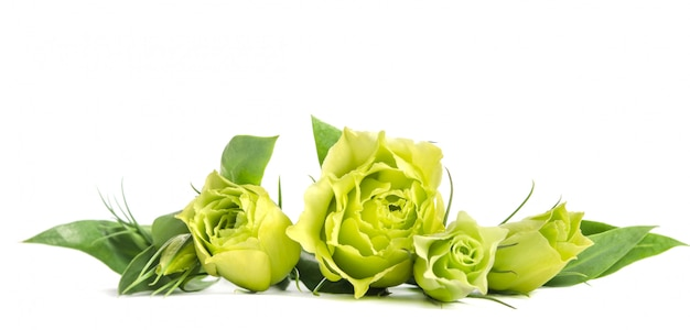 Bukiet zielonych róż kłama na bielu