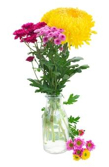 Bukiet żółtych, czerwonych i różowych świeżych kwiatów mamy w wazonie na białym tle