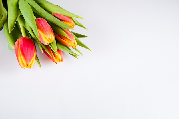 Bukiet żółtych czerwonych tulipanów na jasnej powierzchni, kopia przestrzeń