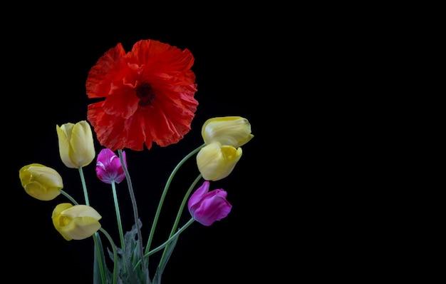 Bukiet żółtych i purpurowych tulipanów i maku na czarnym tle