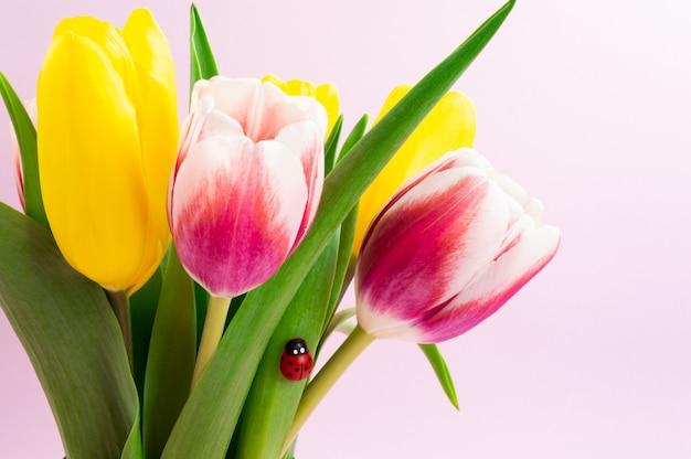 Bukiet żółtych i różowych tulipanów z dekoracyjną biedronką