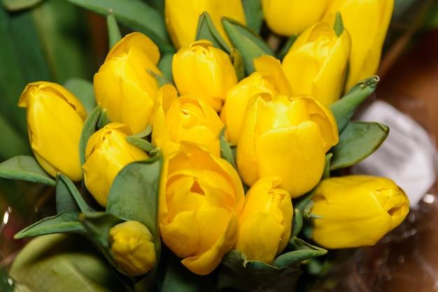 Bukiet żółtych tulipanów. zbliżenie. pąki tulipanów na zielonej łodydze. natura.