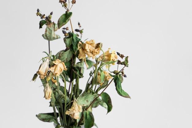 Bukiet zwiędłych kwiatów na białym tle